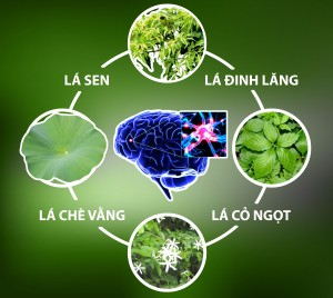 hoat-huyet-duong-nao-tra-dinh-lang1_compressed